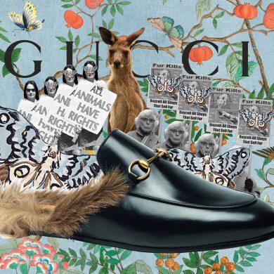 Gucci's Cinderella